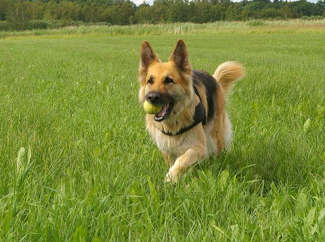 Aportujący pies – jak go tego nauczyć?!